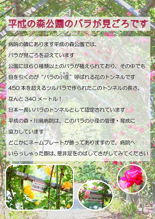 平成の森公園のバラが見ごろです